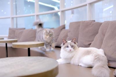 ゆったり広々な室内は猫ちゃんたちの天国♪