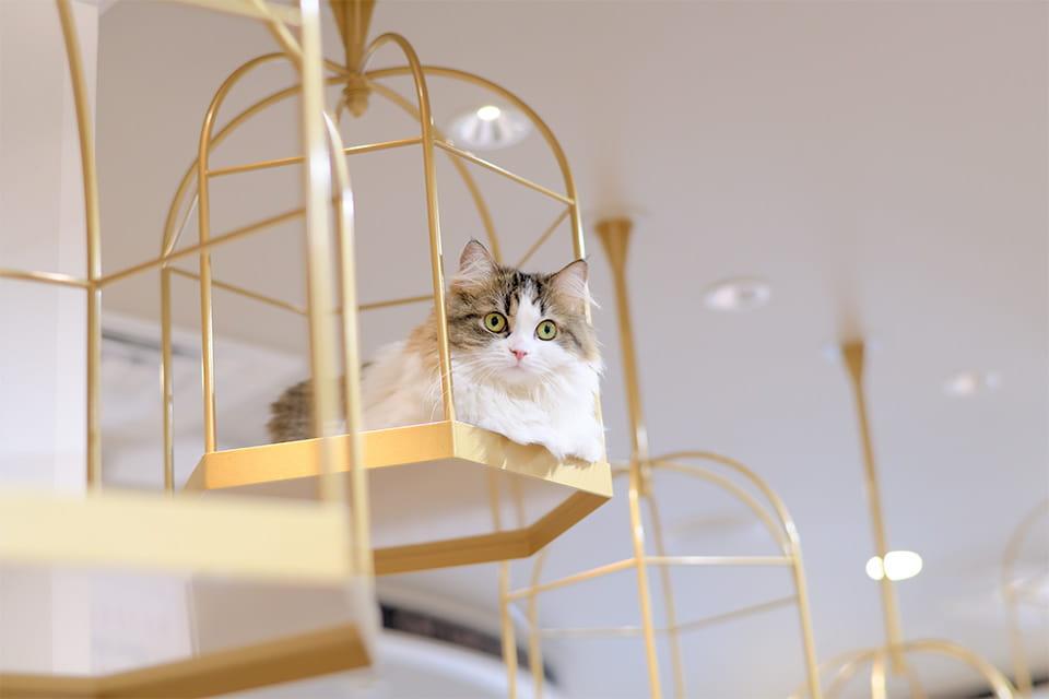 思い思いに過ごす猫ちゃんと優雅なひとときを♪