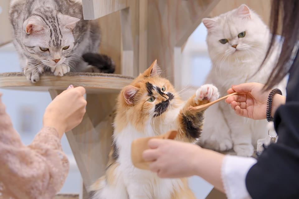 猫ちゃんにモテモテのおやつタイム