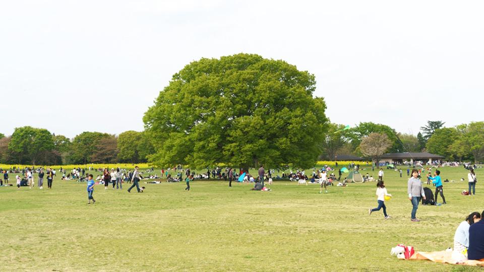 国営昭和記念公園のシンボルツリーのケヤキ