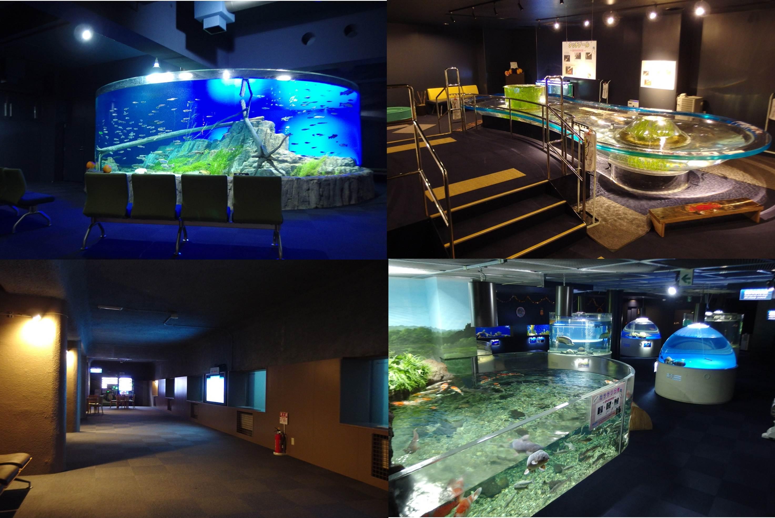 淡水魚の様々な展示と体験