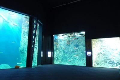 サーモンゾーン~高さ5m×幅12mの大迫力!巨大水槽