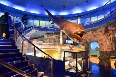 貴重な標本とパノラマ水槽で魅せる 水族館「魚の国」