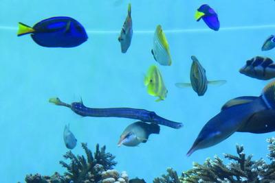世界の海を見に行こう!珍しい生物に出会えるエリア