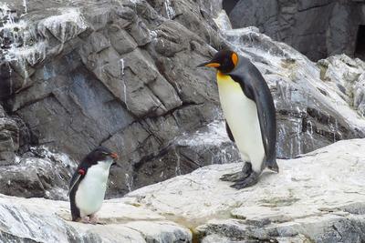 大きな展示施設でのびのび生活している、大人気のペンギンたち