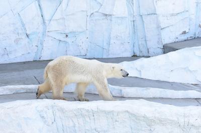 動物たちの本来の姿が見れる動物園