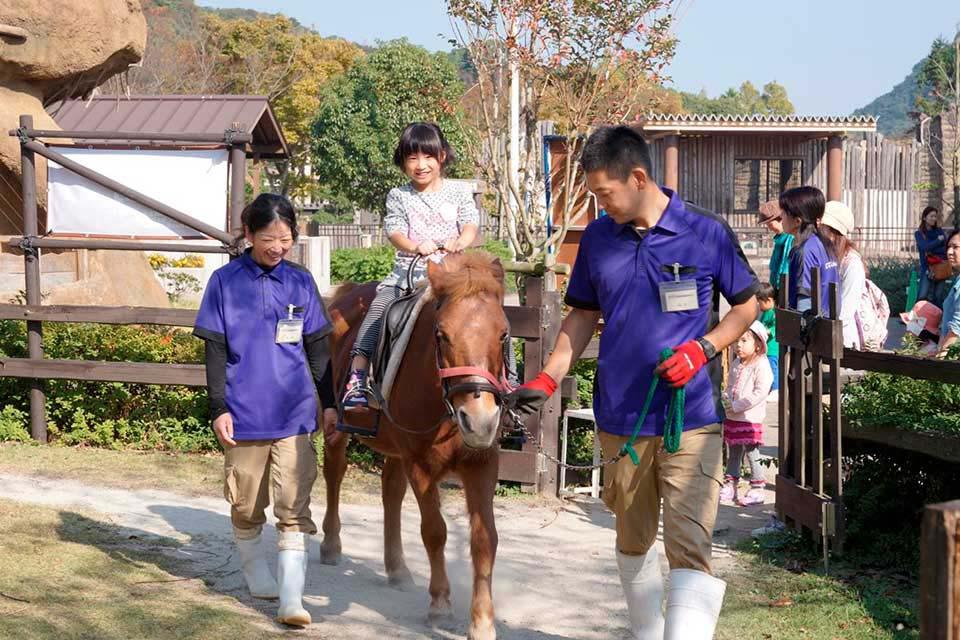 心躍る体験がたっぷり!他には無い日本在来馬「対州馬乗馬体験」がおすすめ!