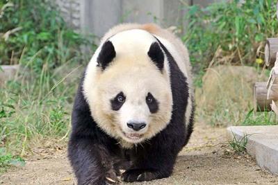 パンダとコアラのいる動物園!動物とこどもの国エリアではふれあいタイムも!
