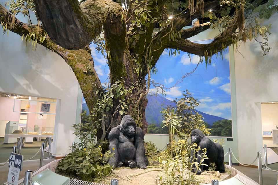 王子動物園には、雨の日ならではの動物園の楽しみ方があるのです