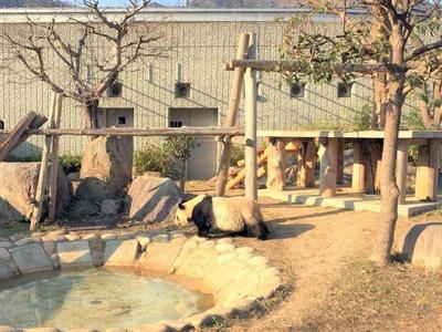 王子動物園 パンダ 飼育場