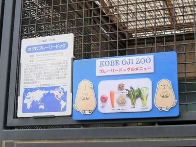 神戸市立王子動物園 園内掲示