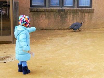 王子動物園 ふれあい広場