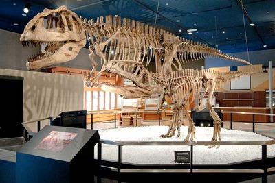 提供:生命館2階 マプサウルス