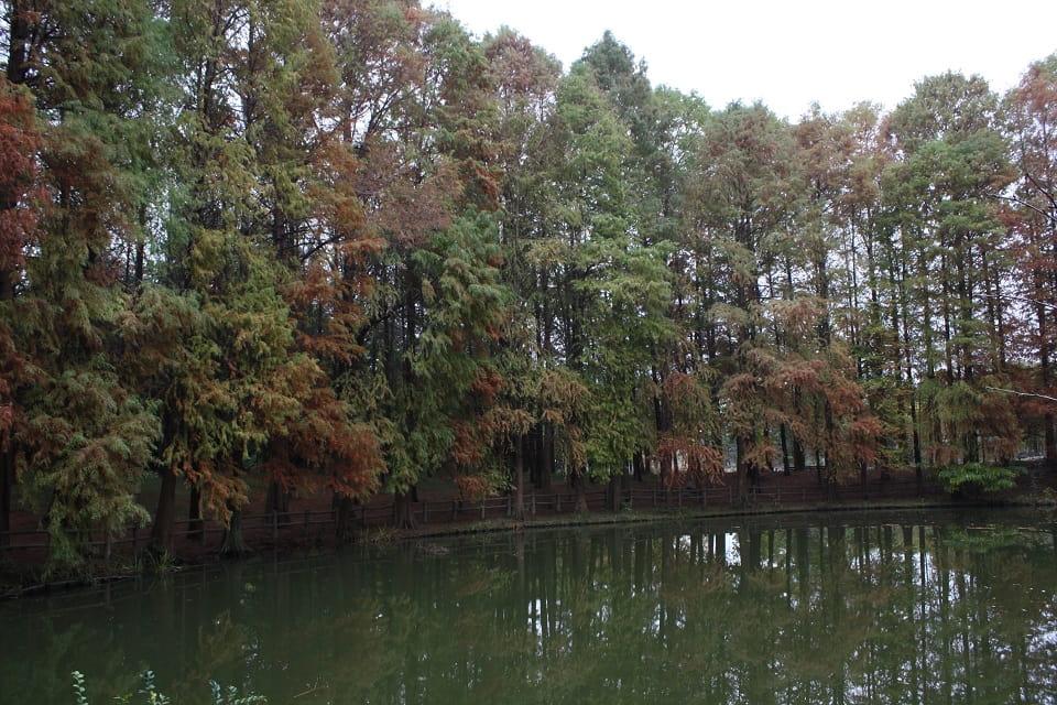 珍しい樹木がたくさん