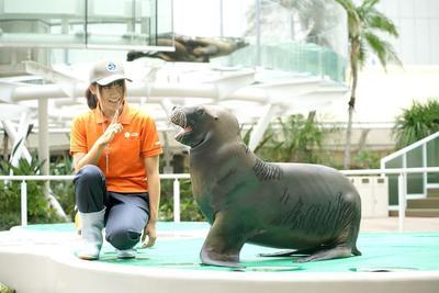 水中の動物たちのパフォーマンス