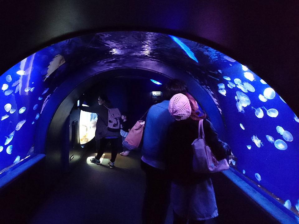 海の生き物たちはどんなふうに生活しているのかを学べる