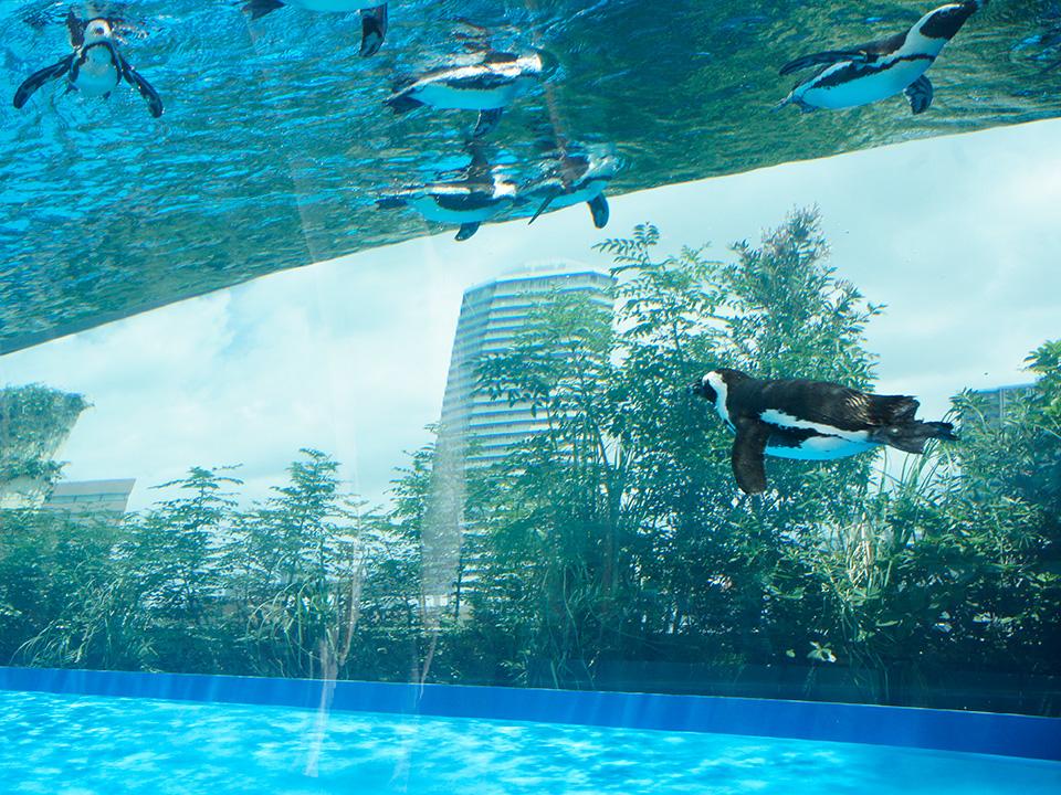アシカやペンギンが空を飛ぶ!!高層ビルのオアシスへ