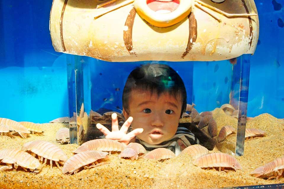 メインは深海生物!! 「おもしろ水族館」でしか見れない白いオオグソクムシ!?