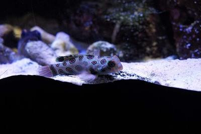 うつくしい模様の魚