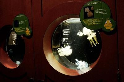 おもしろ水族館 タコクラゲ