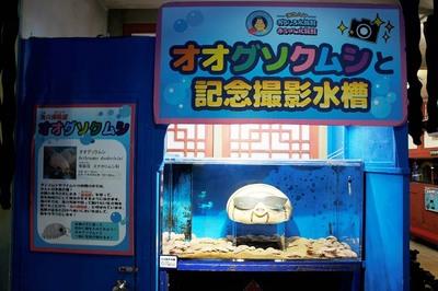 オオグソクムシと記念撮影水槽