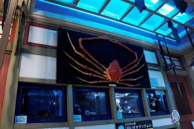 深海生物の展示
