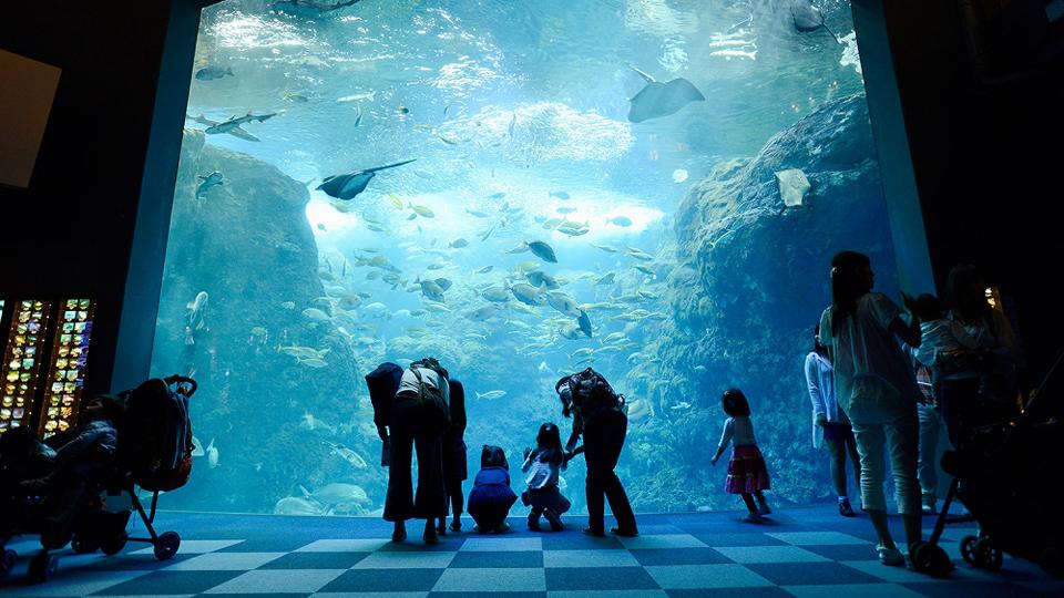 相模湾大水槽。たくさんの魚たちが優雅に泳いでます。