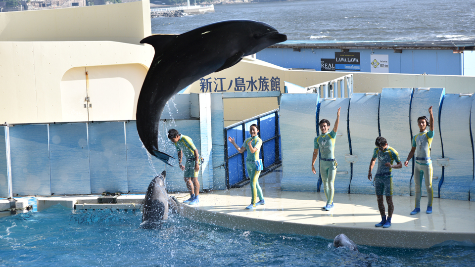 相模湾・江の島・富士山をバックにした最高のロケーションで行われるイルカのショーは必見!