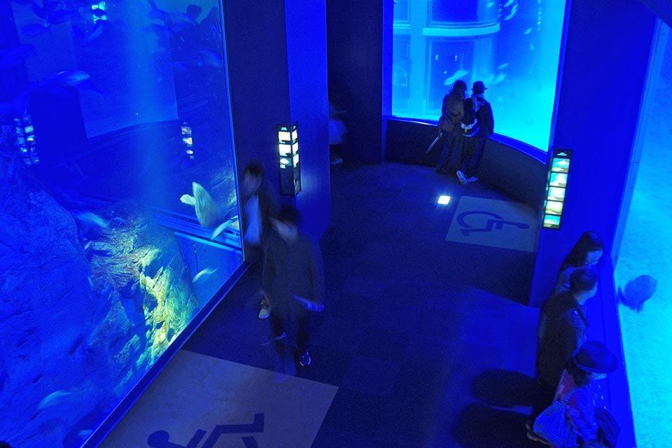 14の大水槽で巡る太平洋 ジンベエザメの姿は必見