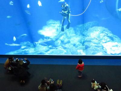 水深10メートルの巨大水槽で繰り広げるアクアウォッチング