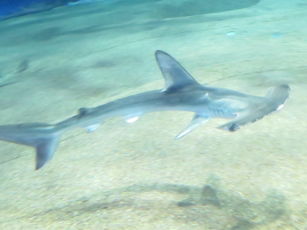 水族館のシンボル約60種のサメと癒しのマンボウ