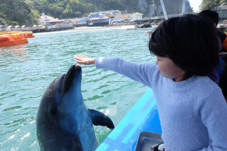 イルカともっと触れ合おう!