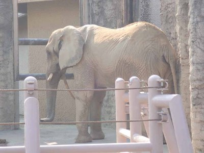 人気者の動物たちは、近くで観察するとやっぱりすごいんです!!