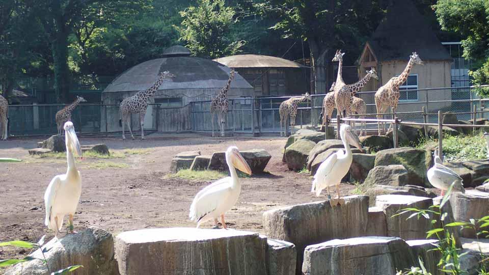 多摩動物公園はたくさんの動物たちが待っているよ!