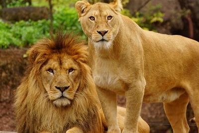 雄大な自然をあじわえる アフリカサバンナゾーン