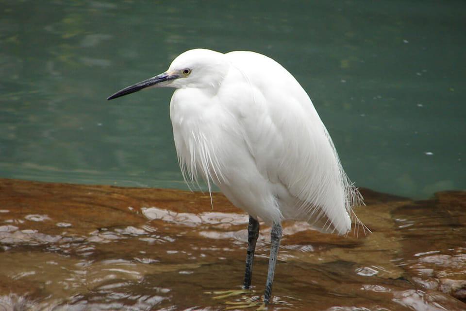鳥の姿を見ることができる鳥の楽園と周辺エリア