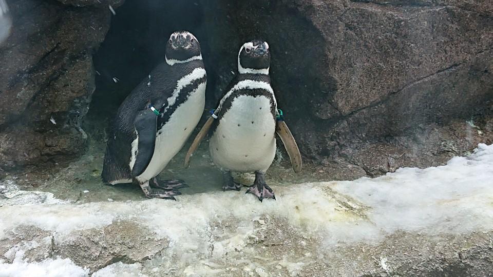 かわいいペンギンたちを間近で見られる!「マゼランペンギンミュージアム」
