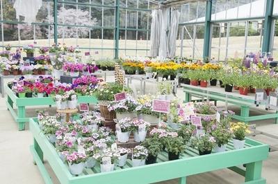 温室ではお花の販売も行ってます
