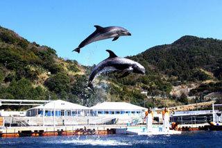 イルカ島 水族館