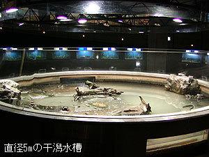 むつごろう水族館