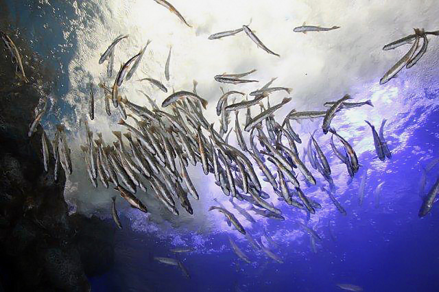 おんねゆ温泉 山の水族館