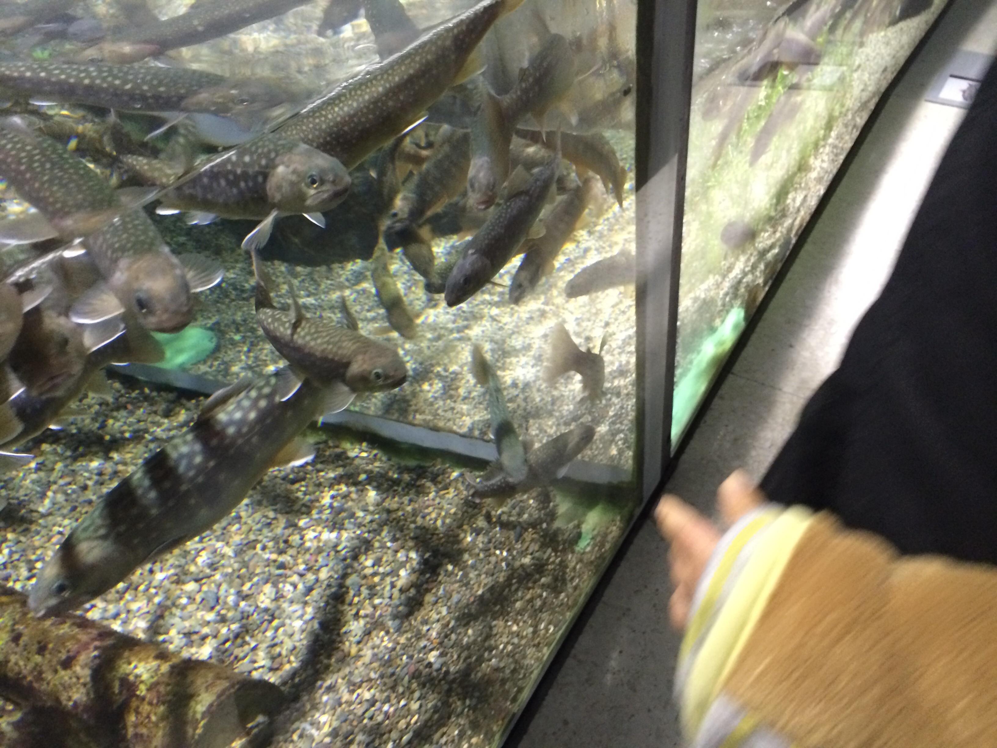 アクアマリンいなわしろかわせみ水族館