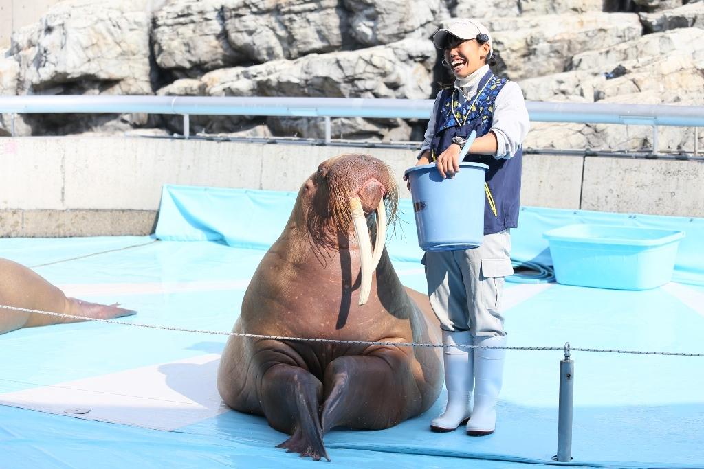 大分マリーンパレス水族館うみたまご