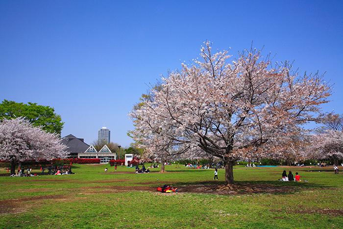 岳の木場公園