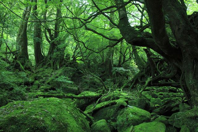 屋久島白谷地区自然休養林白谷雲水峡