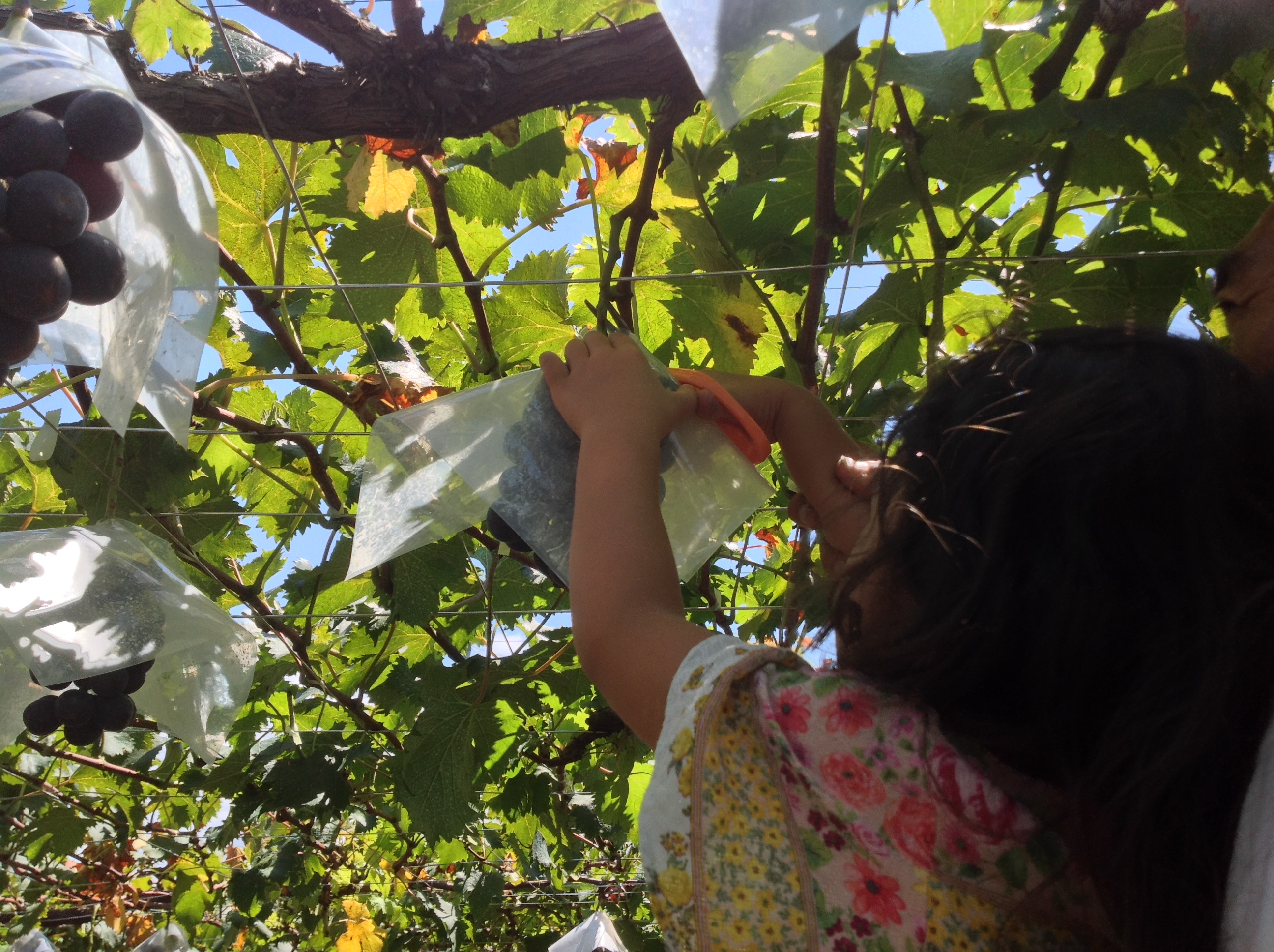 芝口果樹園