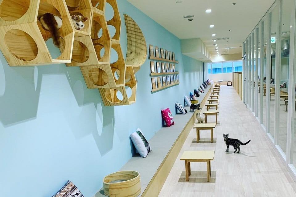 Moff animal cafe 静岡PARCO店