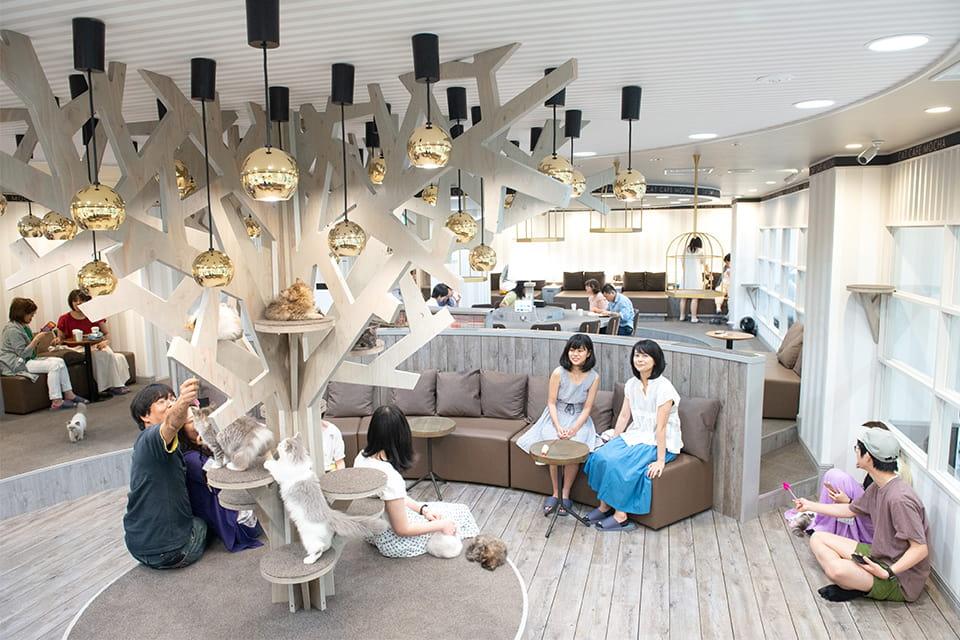 猫カフェ MOCHA 立川店
