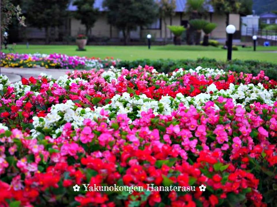 夜久野高原花テラス-ベゴニア園-