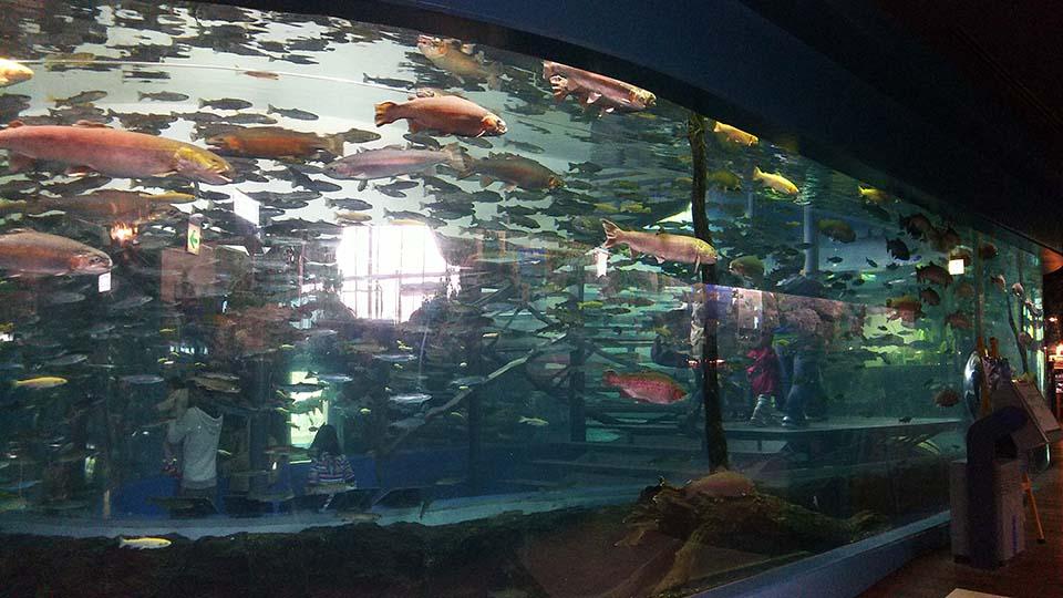 森の中の水族館。山梨県立富士湧水の里水族館
